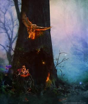 the enchanted wood