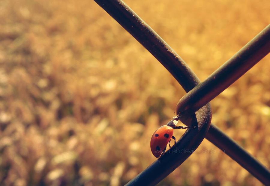 ladybug. by Wiertush