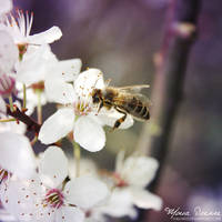 Im a Bee by HasiMD