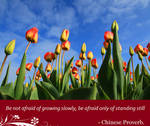 Chinese Proverb - Be not afraid of growing...