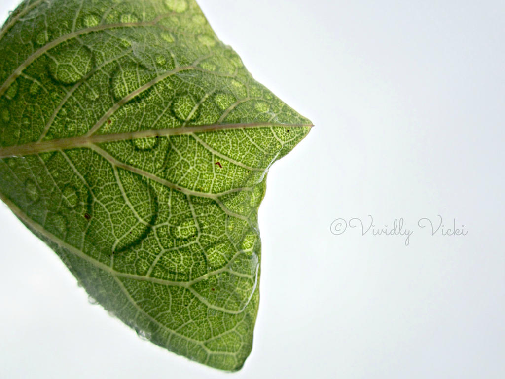 Underneath A Watery Leaf by TreeeFrogg