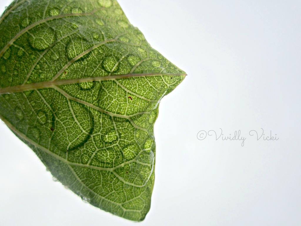Underneath A Watery Leaf by TreeeFrogg