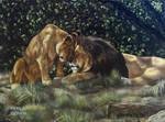 Lions Photo Version