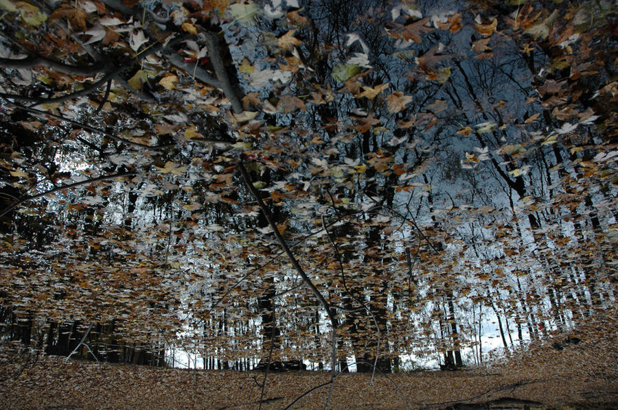 The Hidden Forest by Modernmilk