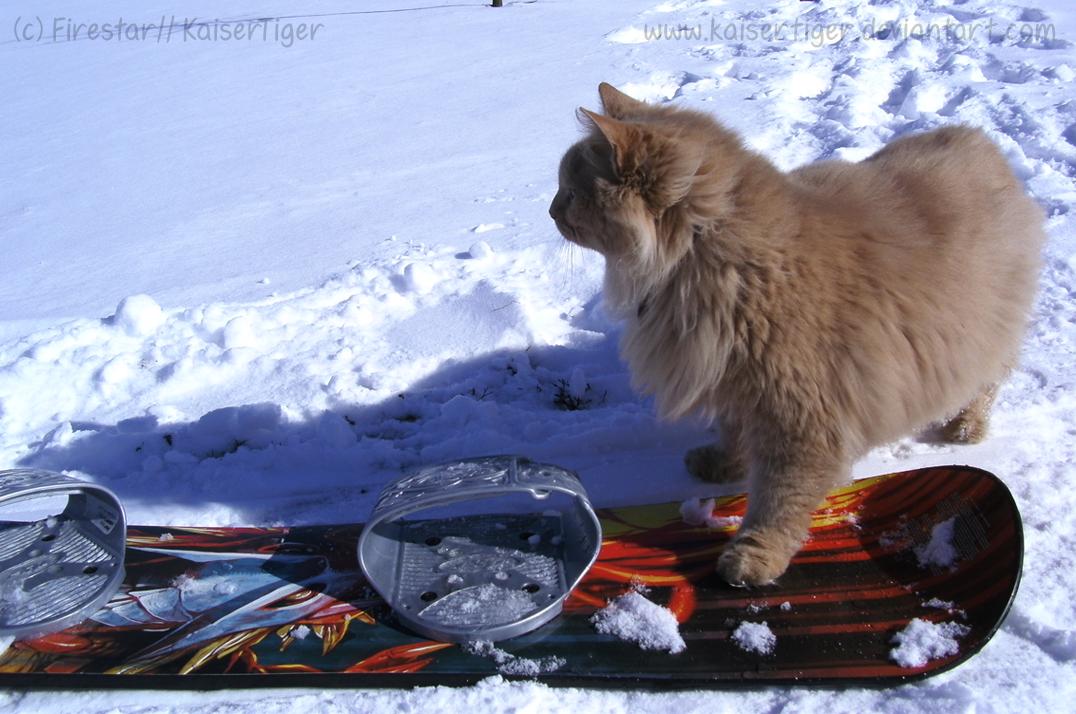 Snowbording by KaiserTiger