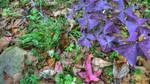 Omie's Garden