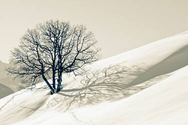 lone tree by Willihelm
