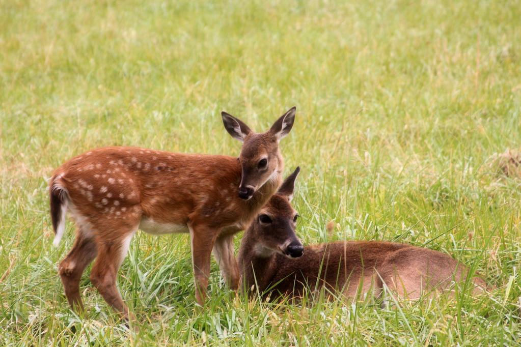 Deer Mommy,
