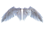 White Wings D001