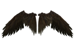 Spotted Brown Wings D001