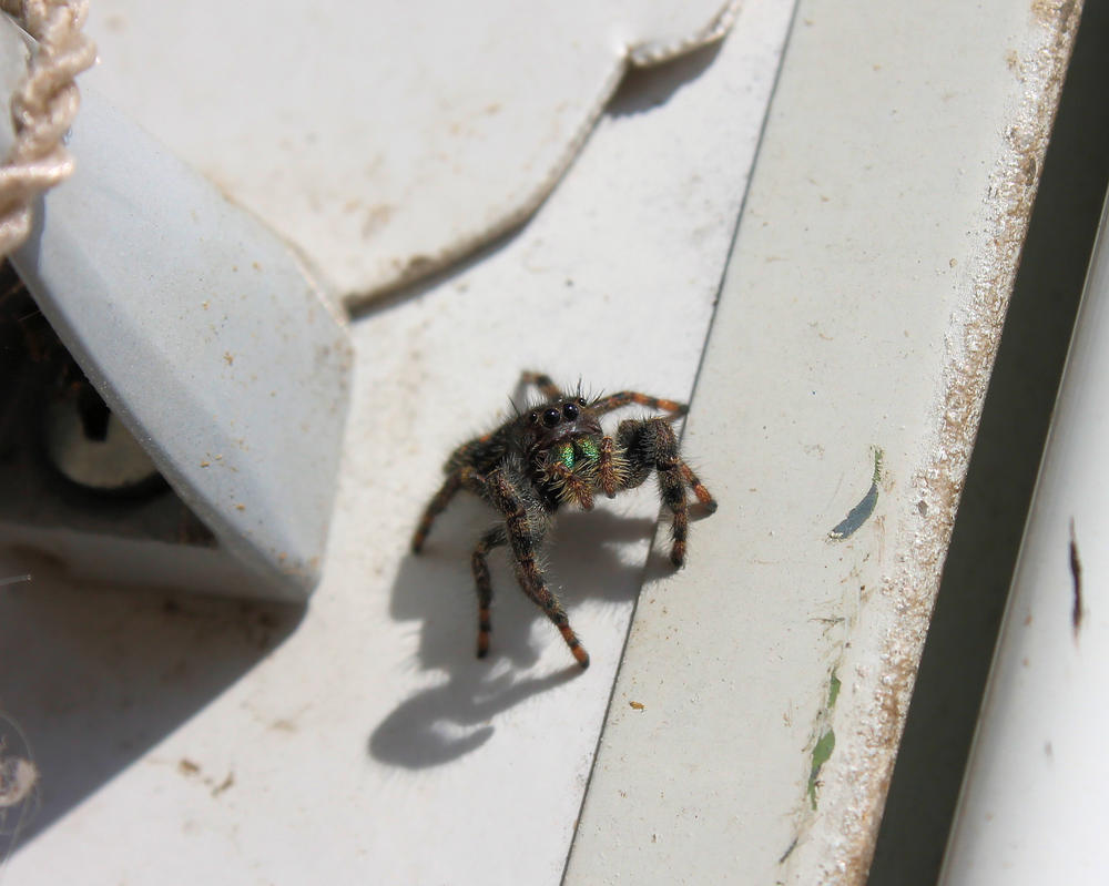 Little house and spider 017-D by Shadowhawk9973