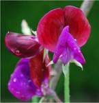 flowers - 159