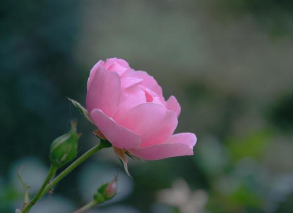 flowers - 267 by jsmith-jc1