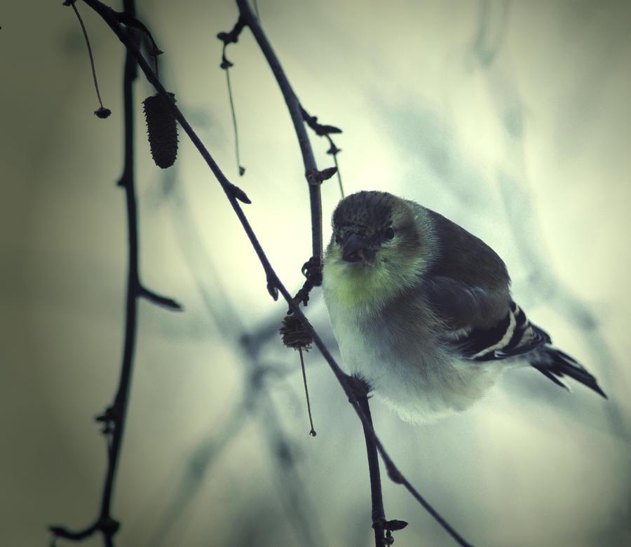.bird. by xcapnXnelehx