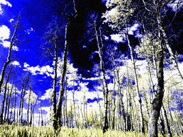 Surreal by Feenix2005