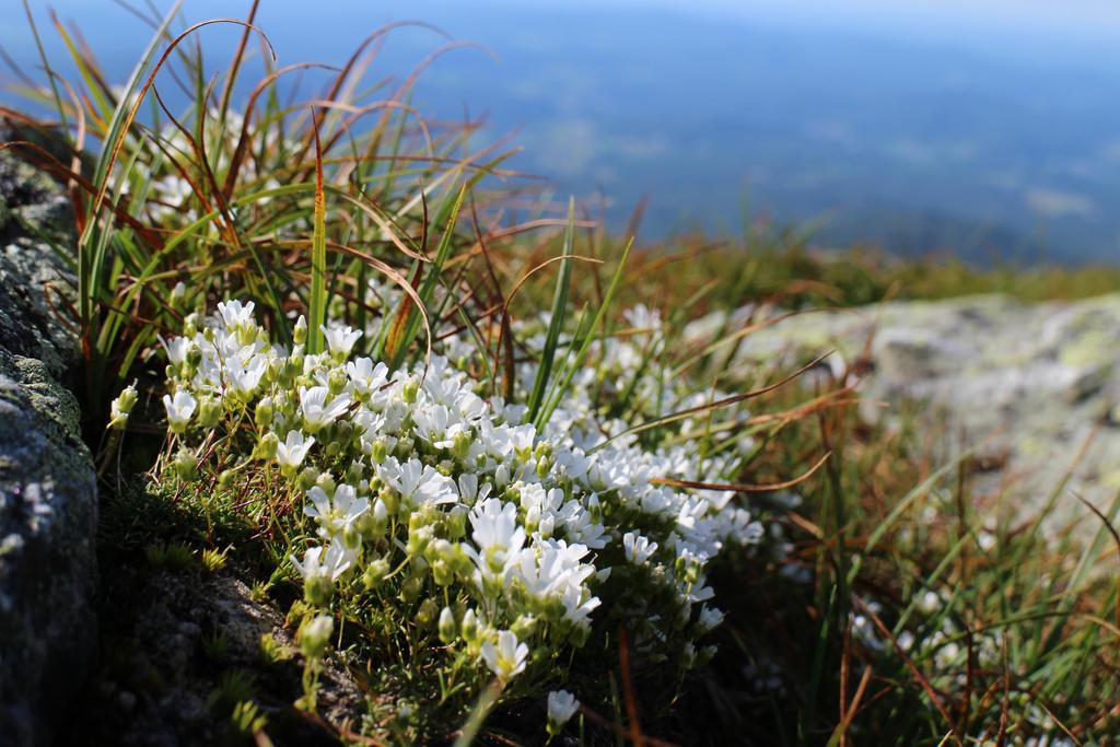 Summit Flowers by tsunami-umi