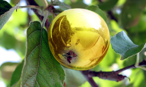 Gold Apple by nnnick