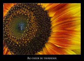 Sunflower heart by lasaucisse
