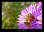 Sac a pollen