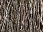 Seamless texture - Wooden bundle #1