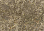 Seamless texture - Stone and Lichen #4