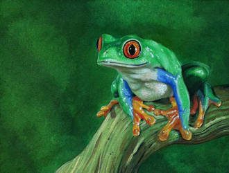 Frog by Krats
