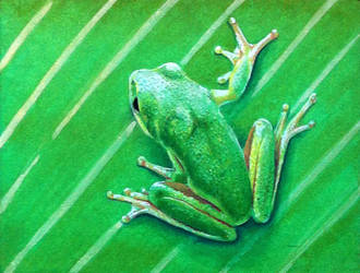 Frog03 by Krats