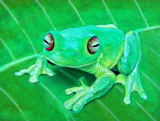 Frog number 4 by Krats
