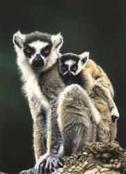 Lemurs by Krats