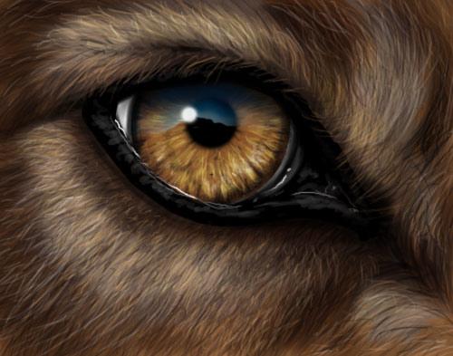 Wolf Eye by Krats
