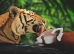 Tiger kisses