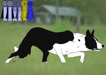 Unregistered Males on Herding-Dog-Registry - DeviantArt