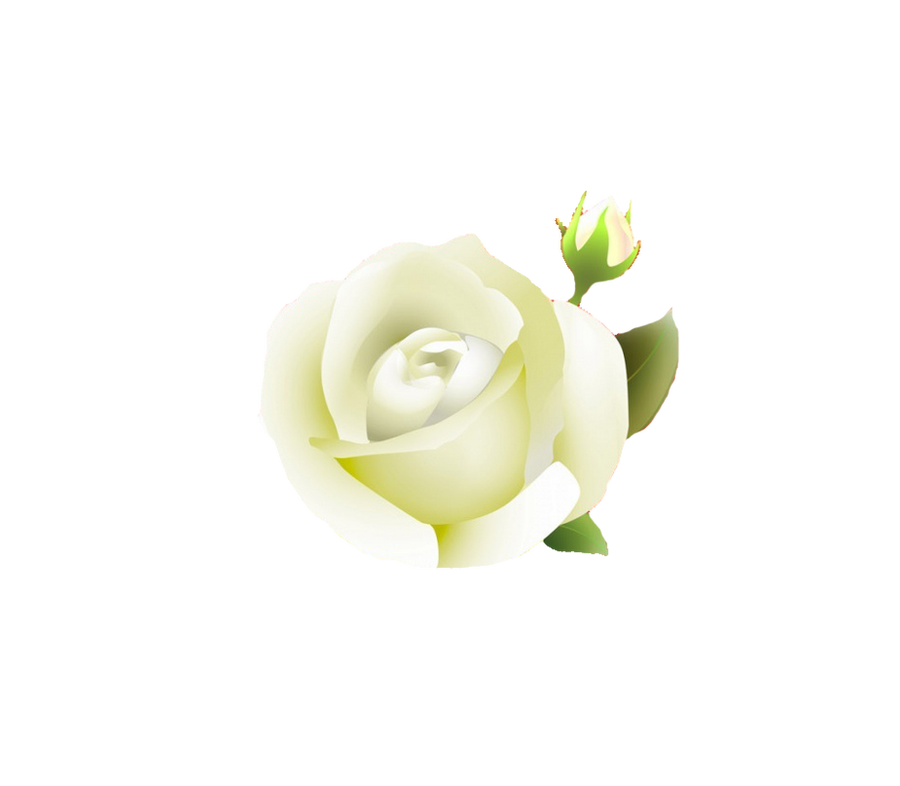 White Rose Png White Rose Png by Melissa tm
