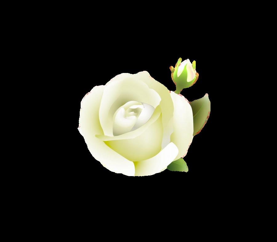 white rose PNG by Melissa-tm on DeviantArt