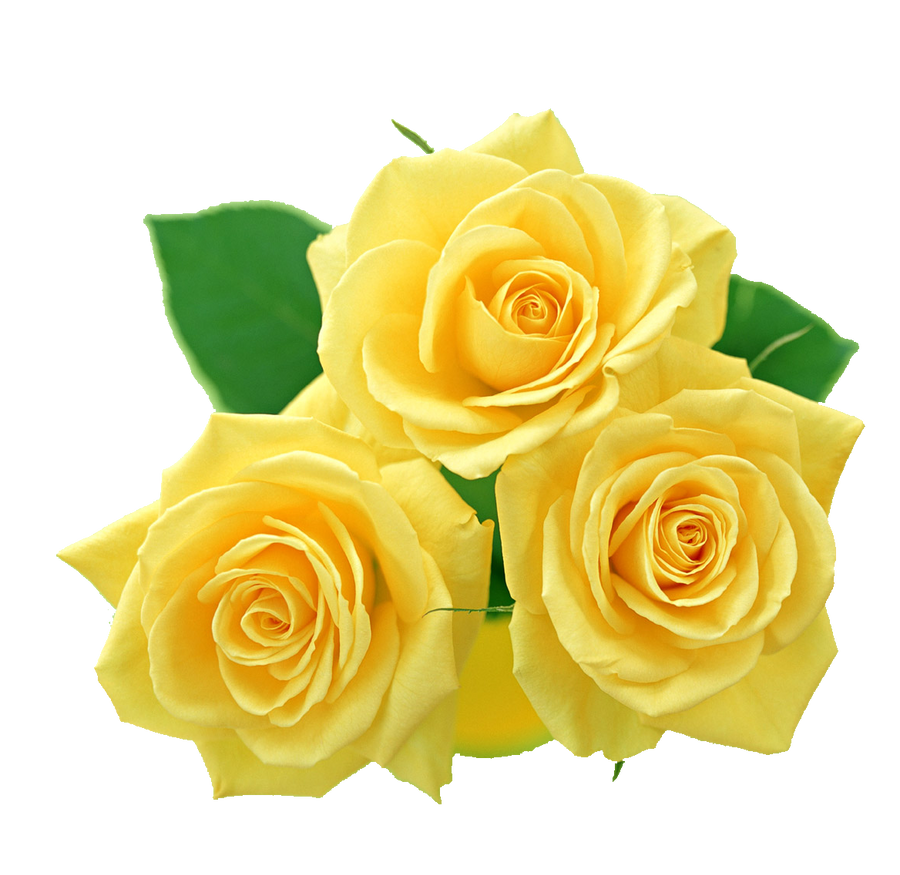 Yellow roses png by melissa tm on deviantart yellow roses png by melissa tm mightylinksfo