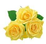 yellow roses PNG