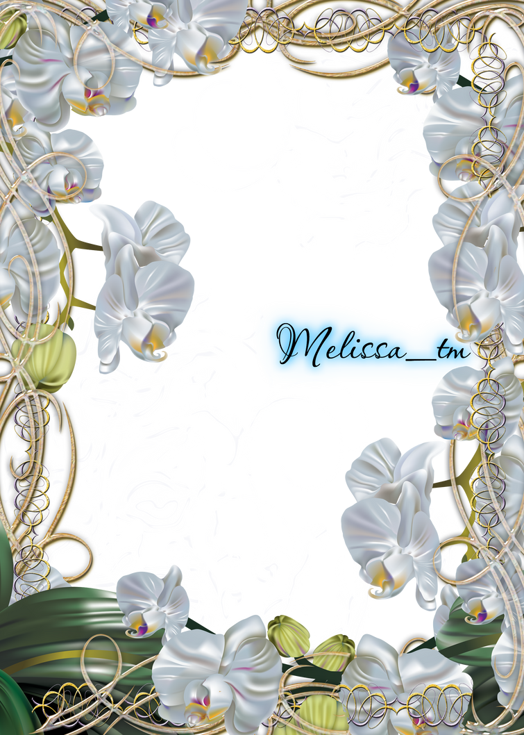 magic silver orchids frame png by Melissa-tm on DeviantArt