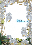 magic silver orchids frame png