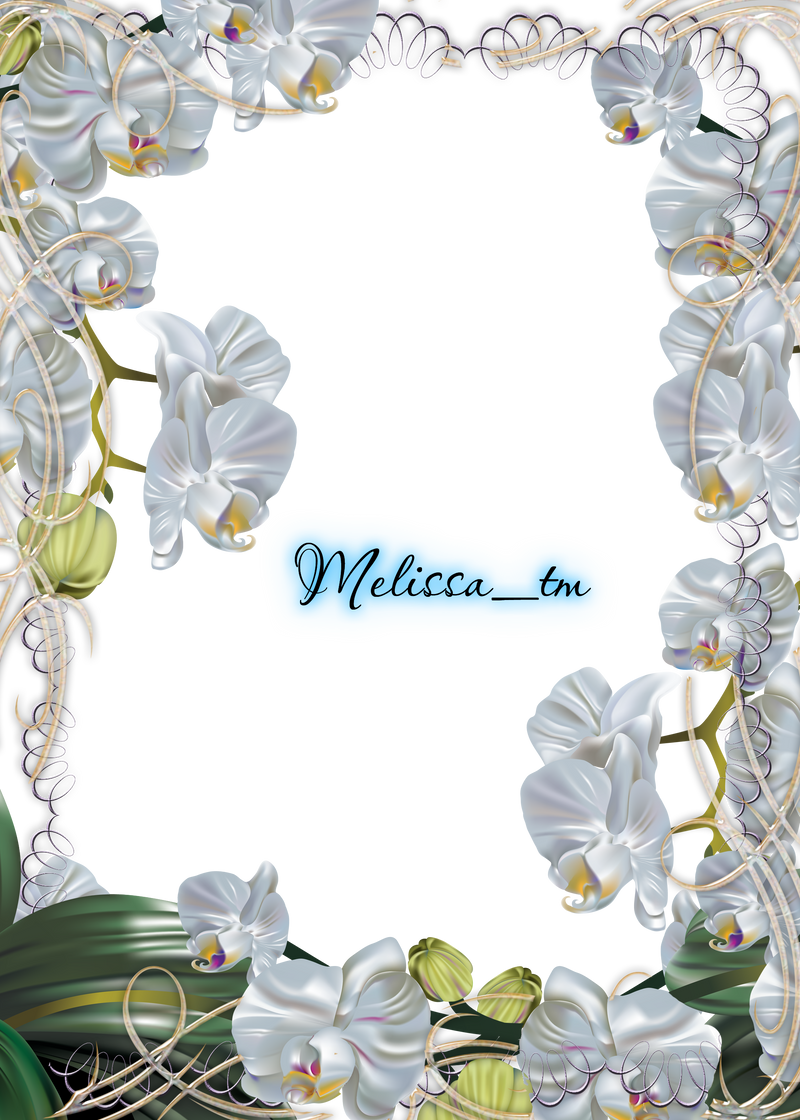 White Frame Png White Orchids Frame Png by