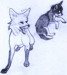 canine studies by Alyssanine