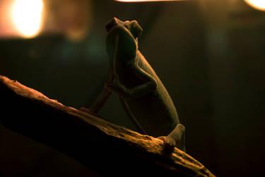 Chameleon-like