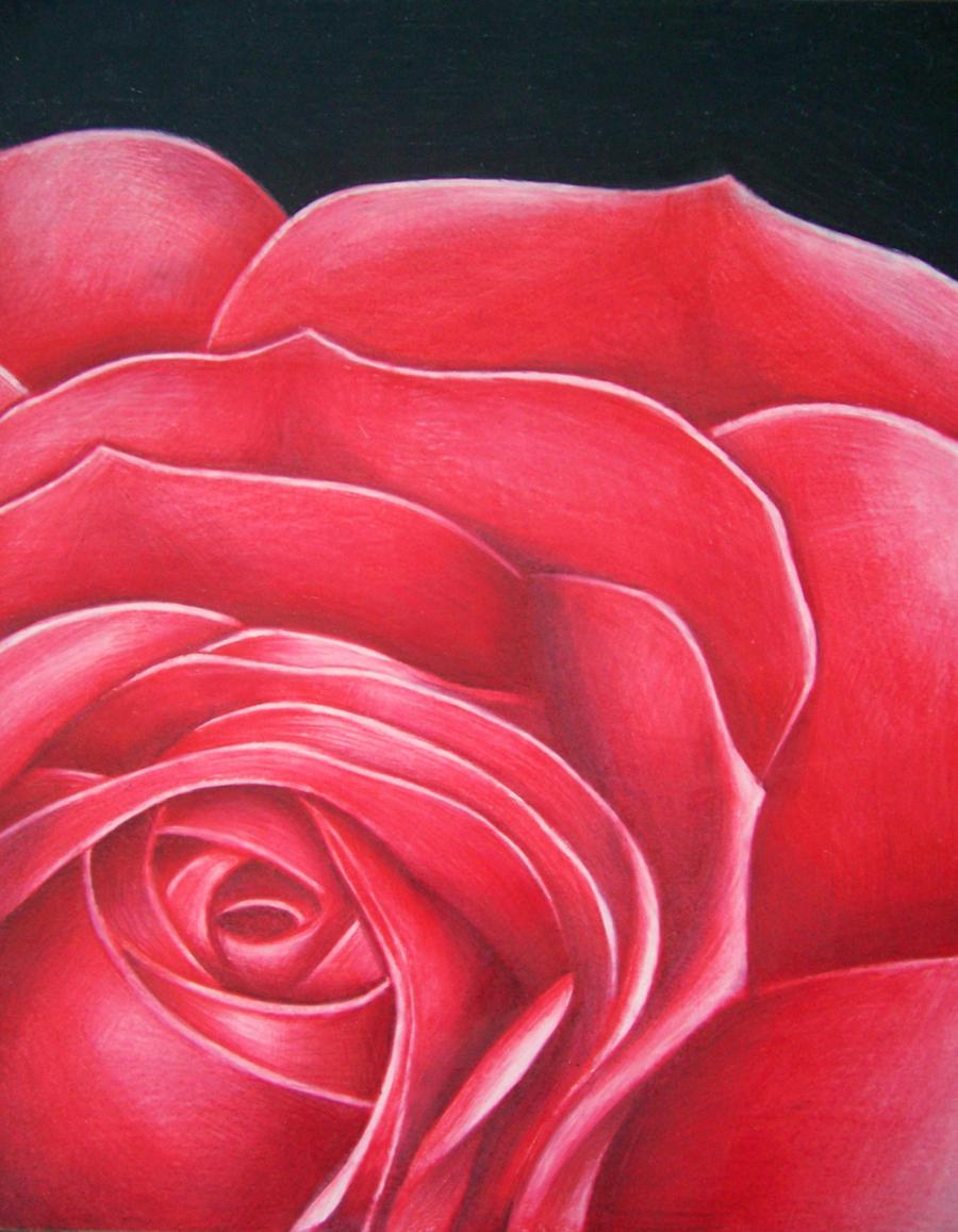 Rose- Color Pencil by Spectrum-VII on DeviantArt