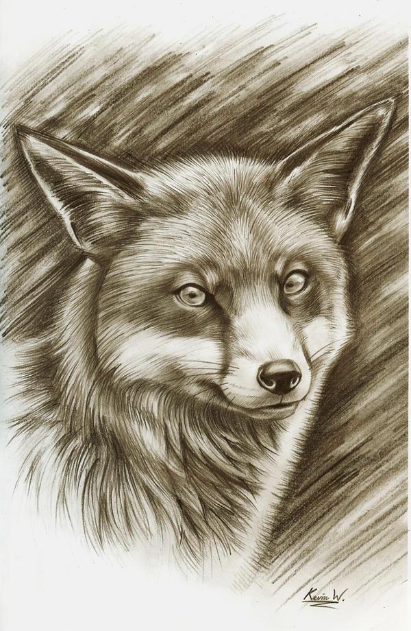 Red Fox by Spectrum-VII