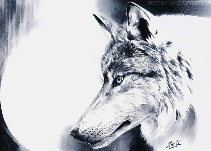 Wolf In Black And White By Spectrum-VII On DeviantArt