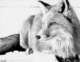 Red Fox in Graphite by Spectrum-VII