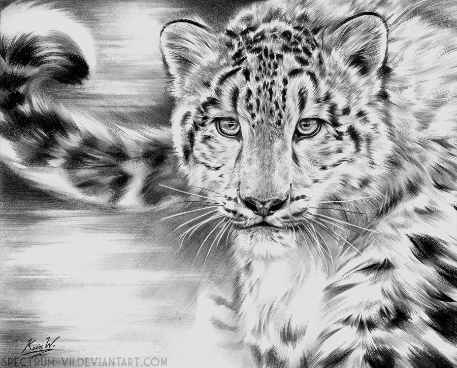 Snow Leopard in Graphite by Spectrum-VII