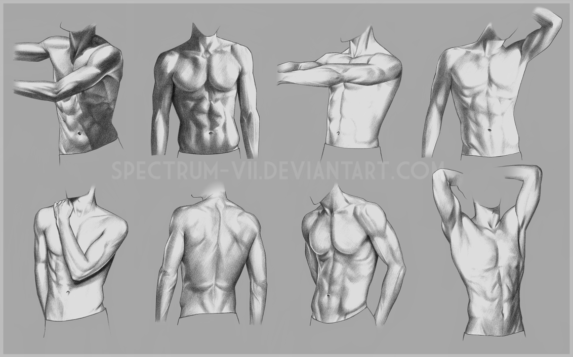 Beautiful Male Torso Anatomy Reference Ensign - Human Anatomy Images ...