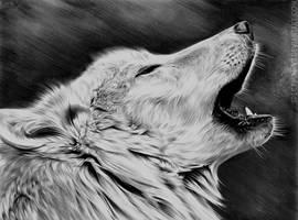 Canis Lupus by Spectrum-VII