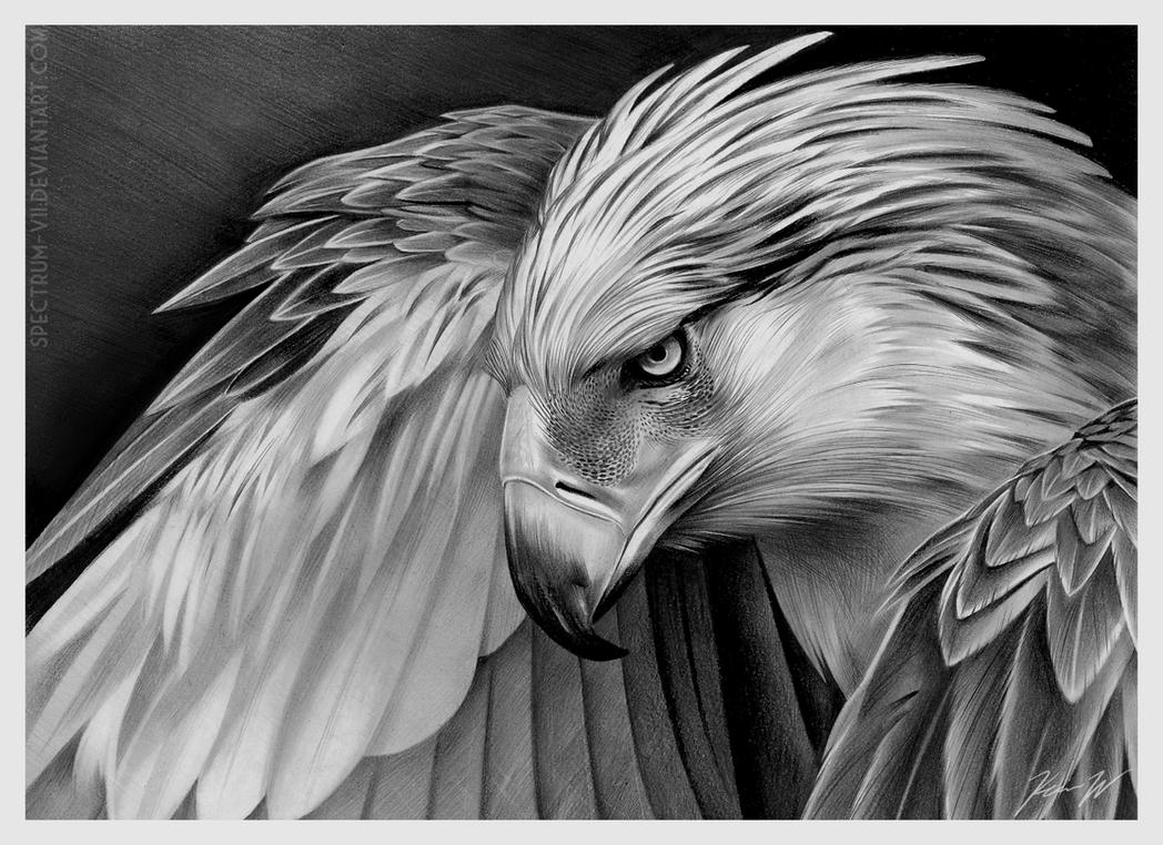 Philippine Eagle by Spectrum-VII on DeviantArt