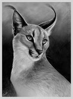 Caracal by Spectrum-VII
